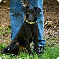 Adopt A Pet :: Bo - Grafton, WI