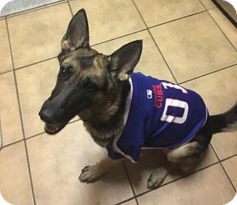 German Shepherd Dog Mix Dog for adoption in Nashua, New Hampshire - Allie (Cat Friendly)