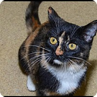 Adopt A Pet :: Almond Joy - Brick, NJ