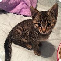 Adopt A Pet :: Darling - Clarkson, KY