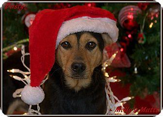 Labrador Retriever/Beagle Mix Dog for adoption in Dixon, Kentucky - Dusty