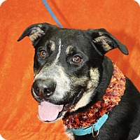 Adopt A Pet :: Archer - Jackson, MI