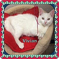 Adopt A Pet :: Vivian - Atco, NJ