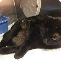 Adopt A Pet :: Ellie - Janesville, WI