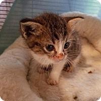 Adopt A Pet :: Tink - Spring, TX