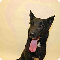 Adopt A Pet :: Starr - Tracy, CA