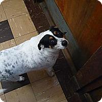 Adopt A Pet :: Queeney - Wisconsin Dells, WI