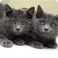 Adopt A Pet :: Nikolay & Anastasia - Chicago, IL