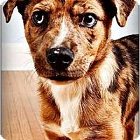Adopt A Pet :: Frank - Owensboro, KY
