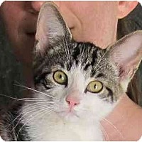 Adopt A Pet :: Gorby - Oxford, NY