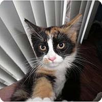 Adopt A Pet :: Blaze - Warren, MI