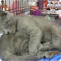 Adopt A Pet :: Brett - Sterling Hgts, MI
