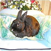 Adopt A Pet :: Homer - Newport, DE