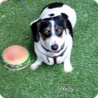 Adopt A Pet :: Holly - Chandler, AZ