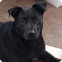 Adopt A Pet :: Elmyra - Long Beach, NY