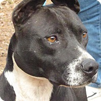 Adopt A Pet :: Oreo - Thomaston, GA