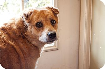Chow Chow Mix Dog for adoption in Tanner, Alabama - Tasha