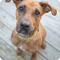 Adopt A Pet :: Portia - Drumbo, ON