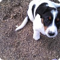 Adopt A Pet :: JADE - Temecula, CA