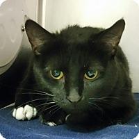 Adopt A Pet :: Willow - Barrington Hills, IL