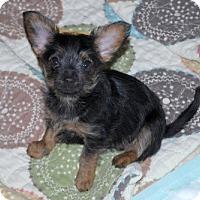 Adopt A Pet :: Kenzie - Minneola, FL