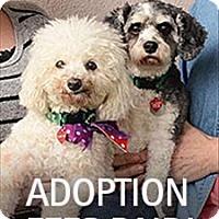 Adopt A Pet :: Muffy - Novato, CA