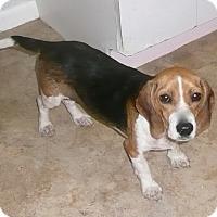 Adopt A Pet :: Piper - Palm Bay, FL