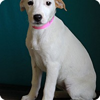 Adopt A Pet :: Emerald - Waldorf, MD