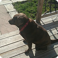 Adopt A Pet :: Jewel's - Northumberland, ON