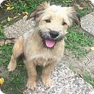 Adopt A Pet :: Hamish
