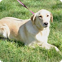 Adopt A Pet :: George (pending) - Coldwater, MI