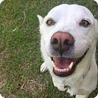 Adopt A Pet :: Jobi - Austin, TX