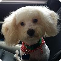 Adopt A Pet :: BO - conroe, TX