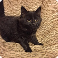 Adopt A Pet :: Betty Boop - Woodstock, ON