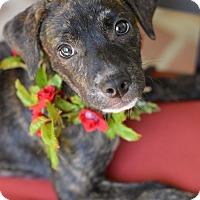 Adopt A Pet :: Rosalie - Baton Rouge, LA