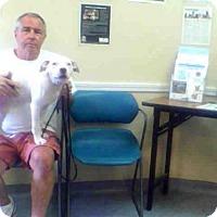 Adopt A Pet :: BINKY - Louisville, KY
