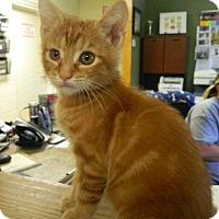 Adopt A Pet :: Creuger - Randleman, NC