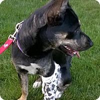 Adopt A Pet :: Sparkle Plenty - Meridian, ID
