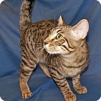 Adopt A Pet :: Elliott - Colorado Springs, CO