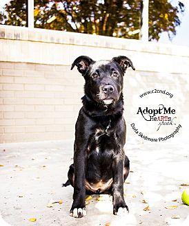 Labrador Retriever Mix Puppy for adoption in Mooresville, North Carolina - Cordelia (Buffy Litter)