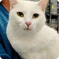 Adopt A Pet :: Bristol - Dallas, TX
