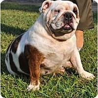 Adopt A Pet :: Ariel - Winder, GA