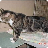 Adopt A Pet :: Big Daddy - Pendleton, OR