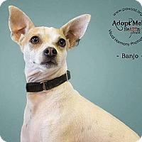 Adopt A Pet :: Banjo - Higley, AZ