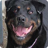 Adopt A Pet :: Roxy - Ascutney, VT