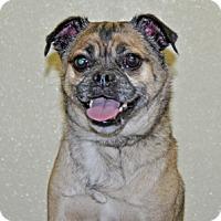 Adopt A Pet :: Dino - Port Washington, NY
