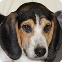 Adopt A Pet :: Bubba - Grafton, MA