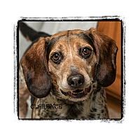 Adopt A Pet :: Clarence - Warren, PA