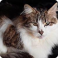 Adopt A Pet :: Flo (and Polly) - Novato, CA