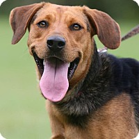 Adopt A Pet :: Sally Anne - North Fort Myers, FL